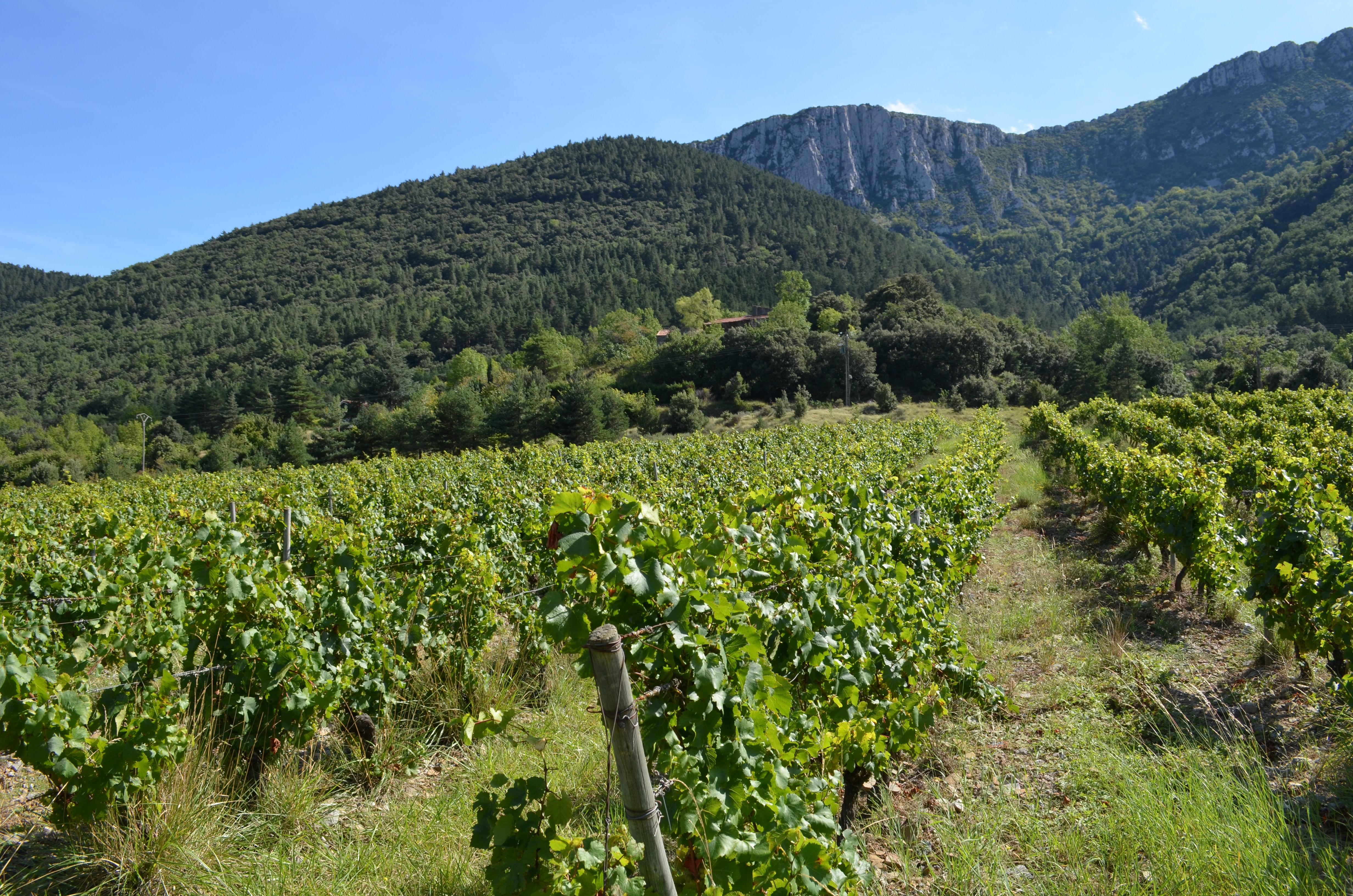 Les coteaux de Chardonnay de Villeraze
